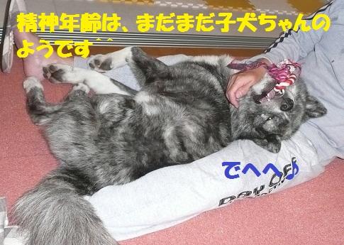 f0121712_156395.jpg