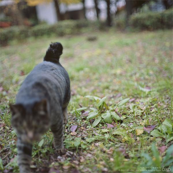 団地の猫たち…_e0117517_2325270.jpg