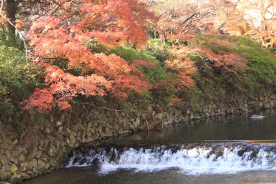 瑠璃光院の秋の特別公開 京都大原八瀬_d0055236_21265836.jpg