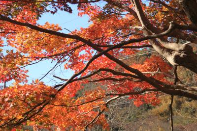 瑠璃光院の秋の特別公開 京都大原八瀬_d0055236_21271328.jpg