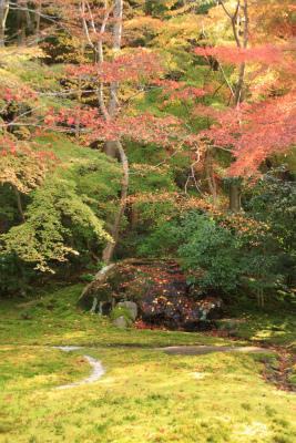 瑠璃光院の秋の特別公開 京都大原八瀬_d0055236_2146375.jpg