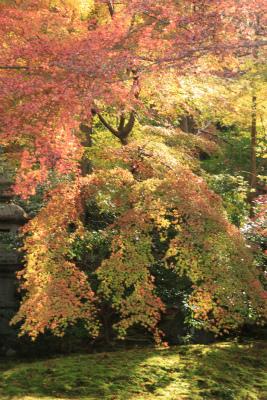 瑠璃光院の秋の特別公開 京都大原八瀬_d0055236_2147486.jpg