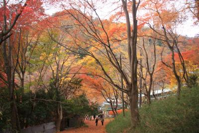 瑠璃光院の秋の特別公開 京都大原八瀬_d0055236_21554169.jpg