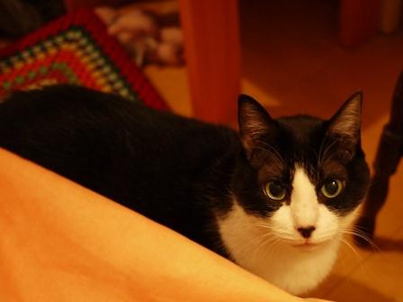 ちょっといいかな猫 空編。_a0143140_02764.jpg