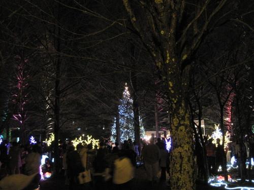 軽井沢・冬ものがたり 2012~White Christmas in 軽井沢 ①_f0236260_0185532.jpg