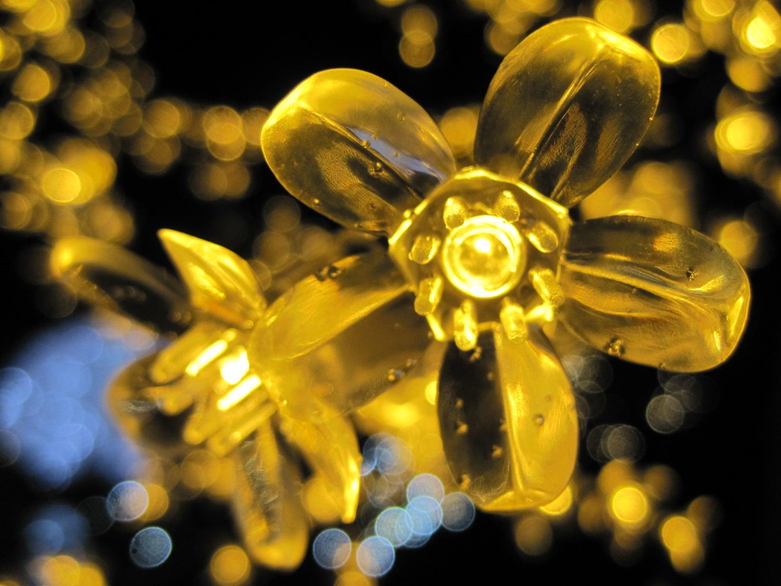 軽井沢・冬ものがたり 2012~White Christmas in 軽井沢 ①_f0236260_2404614.jpg