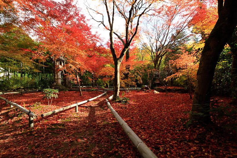 直指庵 - 京都の紅葉2011_e0214961_20191425.jpg