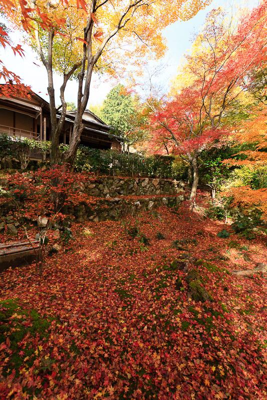 直指庵 - 京都の紅葉2011_e0214961_20191526.jpg