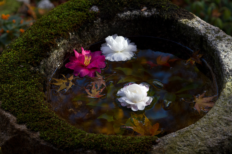 直指庵 - 京都の紅葉2011_e0214961_20192139.jpg