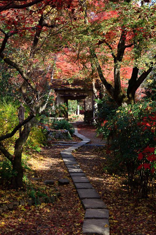 直指庵 - 京都の紅葉2011_e0214961_20192230.jpg