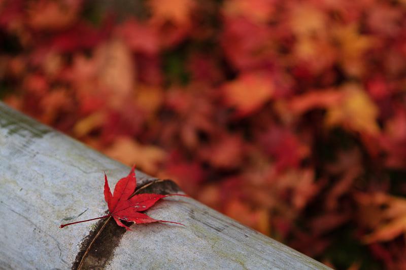 直指庵 - 京都の紅葉2011_e0214961_20192462.jpg