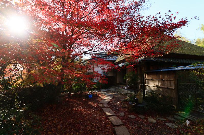 直指庵 - 京都の紅葉2011_e0214961_2019922.jpg
