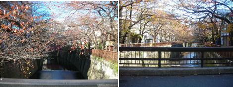散歩を楽しく/紅葉とクリスマスと礼拝と_d0183174_1924111.jpg