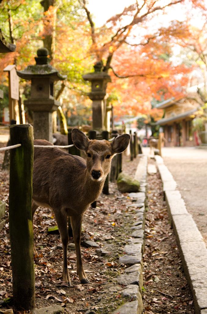 12/4 奈良公園の続き_f0167977_1612456.jpg