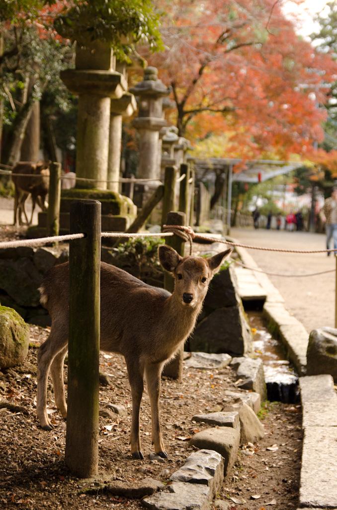 12/4 奈良公園の続き_f0167977_1613562.jpg