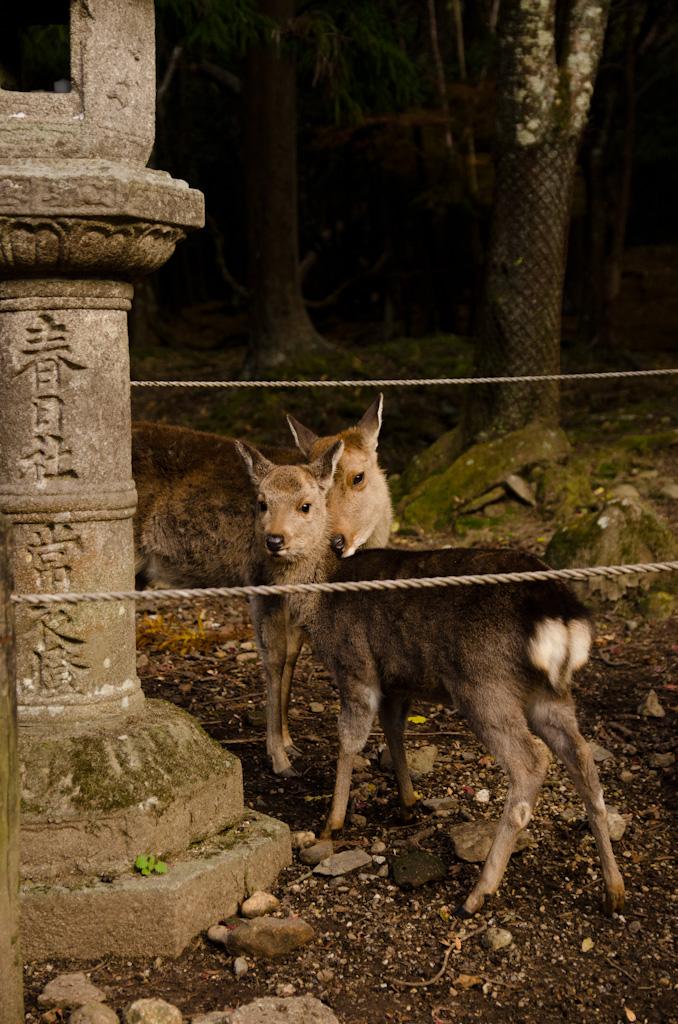 12/4 奈良公園の続き_f0167977_16141595.jpg