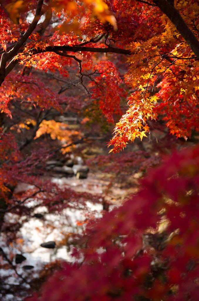 12/4 奈良公園の続き_f0167977_16154962.jpg