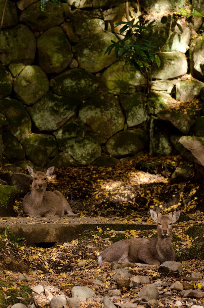 12/4 奈良公園の続き_f0167977_161598.jpg