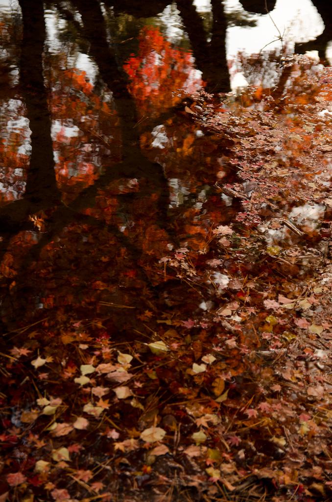 12/4 奈良公園の続き_f0167977_1619580.jpg