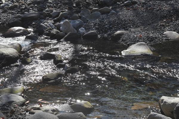 安曇野と日本サル_f0145483_1834954.jpg