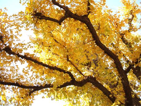 銀杏並木のテラスでランチ_d0174704_12321157.jpg