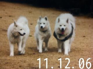 12月6日のお友達_d0148408_1630620.jpg
