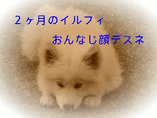 12月6日のお友達_d0148408_1630630.jpg
