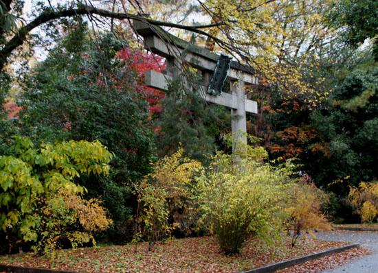 梨の木神社 紅葉後半の輝き_e0048413_19312349.jpg
