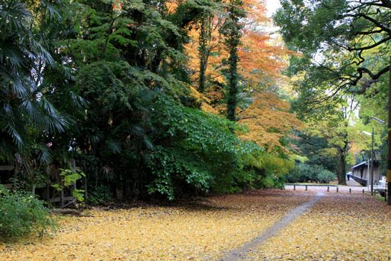 梨の木神社 紅葉後半の輝き_e0048413_19313965.jpg