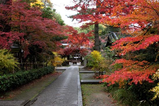 梨の木神社 紅葉後半の輝き_e0048413_19315040.jpg