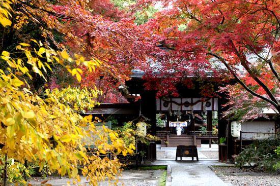 梨の木神社 紅葉後半の輝き_e0048413_1932221.jpg