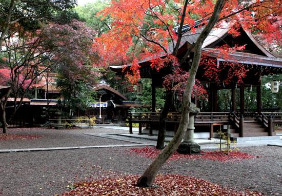 梨の木神社 紅葉後半の輝き_e0048413_19322319.jpg
