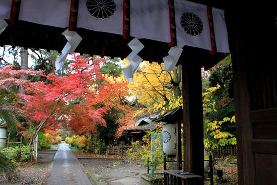 梨の木神社 紅葉後半の輝き_e0048413_19323334.jpg