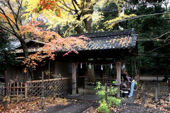 梨の木神社 紅葉後半の輝き_e0048413_19324874.jpg