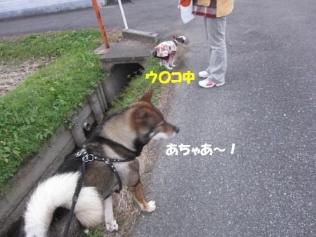 f0143123_210538.jpg