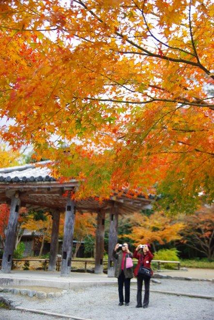 再び京都へ 宇治 平等院_e0171336_1254993.jpg