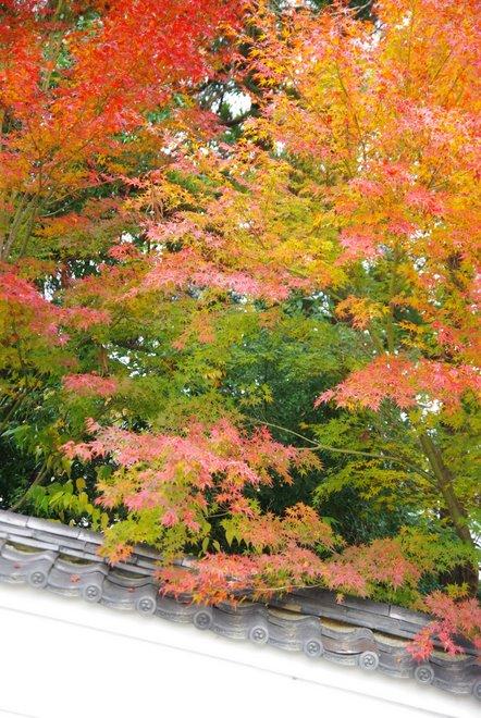再び京都へ 宇治 平等院_e0171336_23534814.jpg