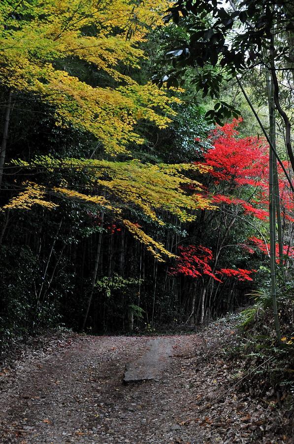 慈眼寺(兵庫県三木市)_d0148541_2039593.jpg