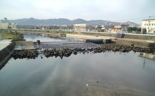 徒歩通勤の途中…室見川にて~白鷺と鴨が仲良く~!!_d0082356_1247244.jpg