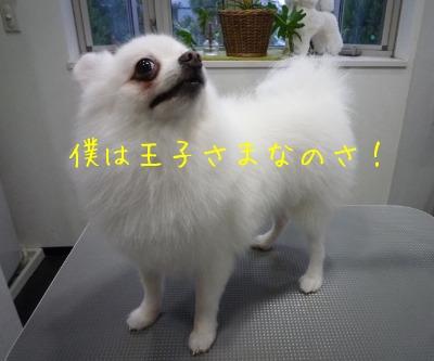 f0177261_930146.jpg