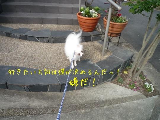 f0177261_9353788.jpg