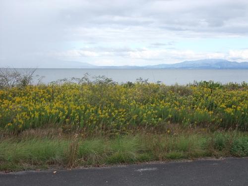 琵琶湖一周サイクリング180km ~湖西編~_d0174462_2583398.jpg