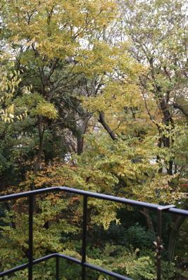 森の様子_d0000274_1525014.jpg