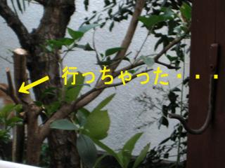 c0211810_10443621.jpg