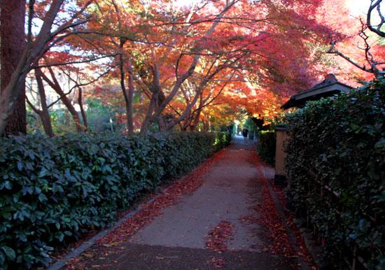 嵯峨野を歩く 紅葉後半_e0048413_15404231.jpg