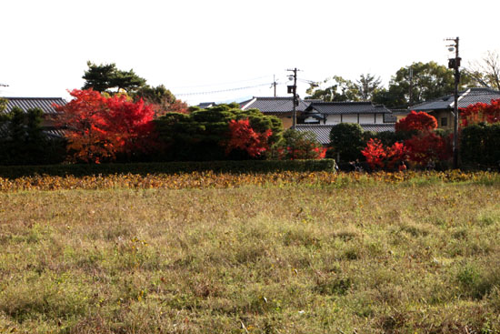 嵯峨野を歩く 紅葉後半_e0048413_15405483.jpg