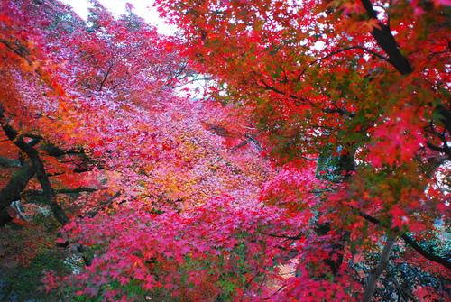 京便り_c0116714_17101917.jpg