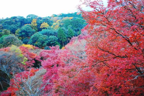 京便り_c0116714_17103965.jpg
