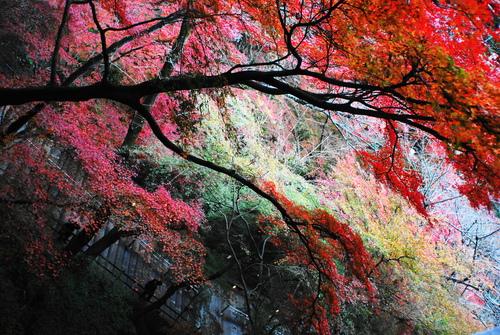 京便り_c0116714_17174897.jpg