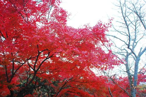 京便り_c0116714_1785164.jpg